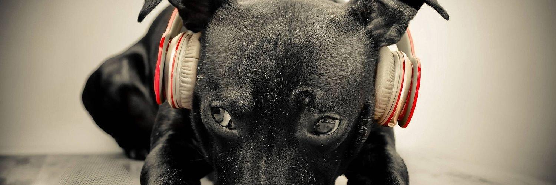 Capa Facebook pets-capa-para-twitter-cachorro-musica Capas para Twitter