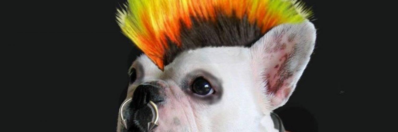 Capa Facebook pets-capa-para-twitter-cachorro-punk Capas para Twitter
