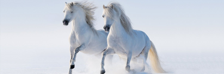 Capa Facebook pets-capa-para-twitter-cavalos Capas para Twitter