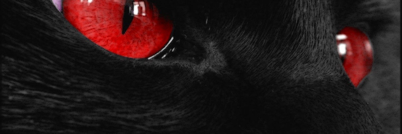 Capa Facebook pets-capa-para-twitter-gato-1 Capas para Twitter