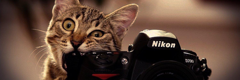 Capa Facebook pets-capa-para-twitter-gato-fotografo Capas para Twitter