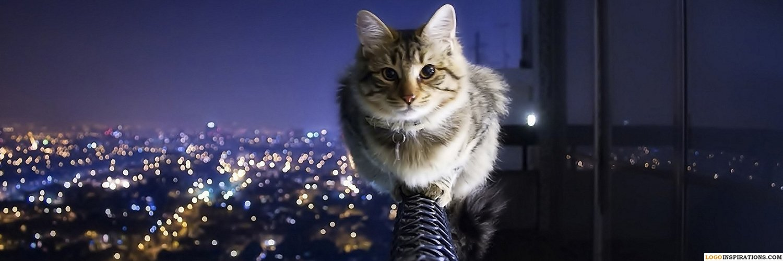 Capa Facebook pets-capa-para-twitter-gato-noite Capas para Twitter