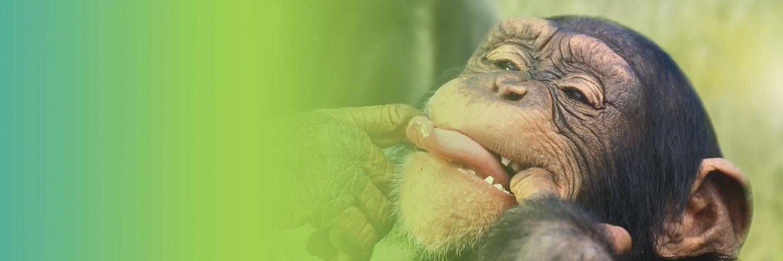Capa Facebook pets-capa-para-twitter-macaco Capas para Twitter
