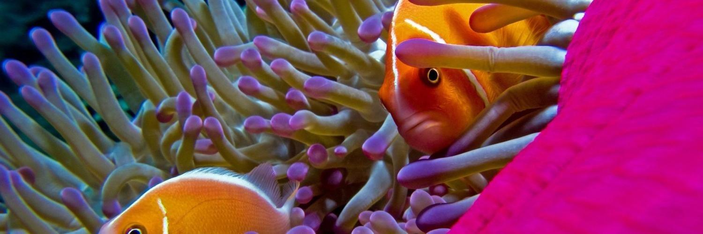 Capa Facebook pets-capa-para-twitter-peixe Capas para Twitter