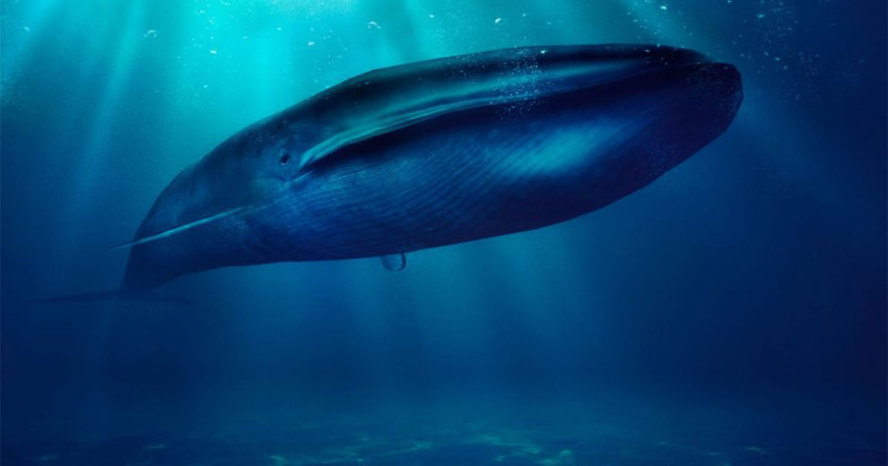 desafio da baleia azul