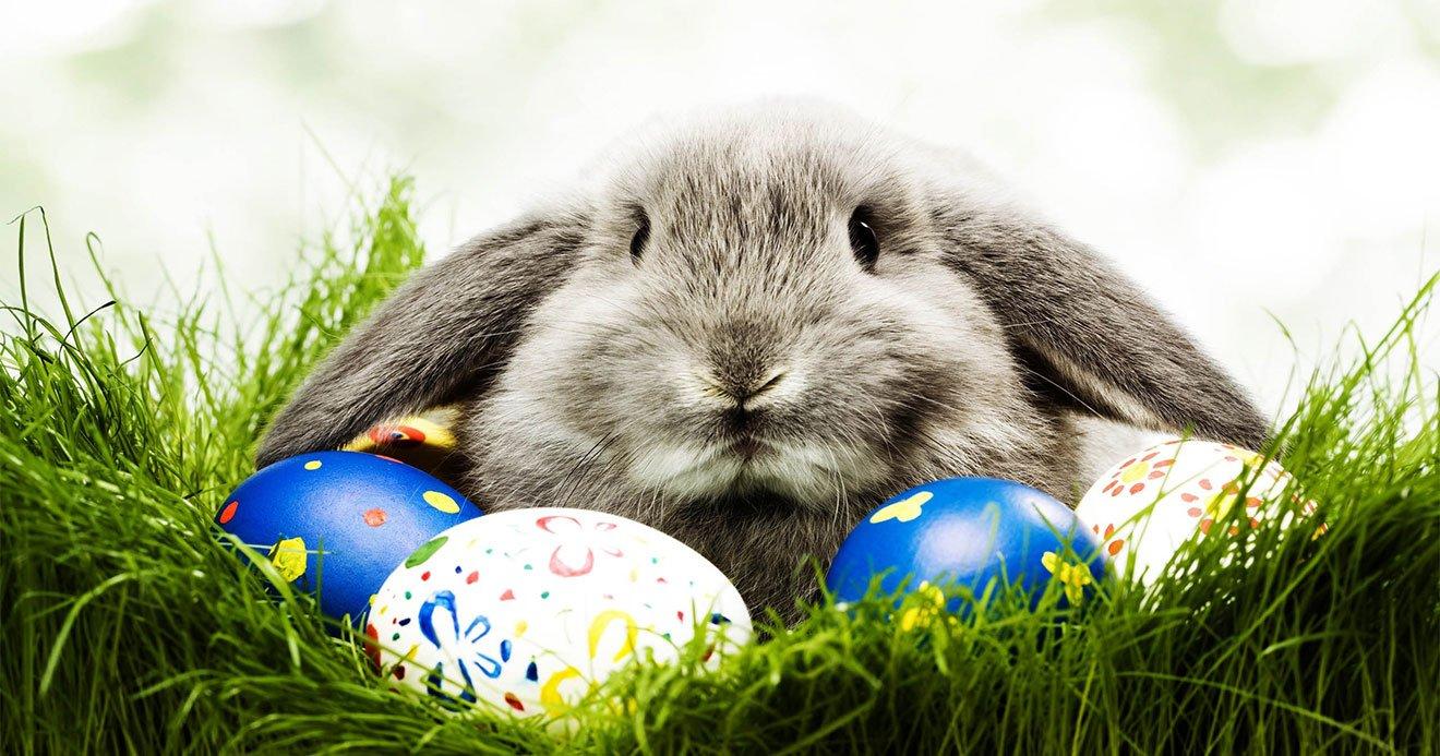 mensagens de Pascoa para namorado, família e amigos 8