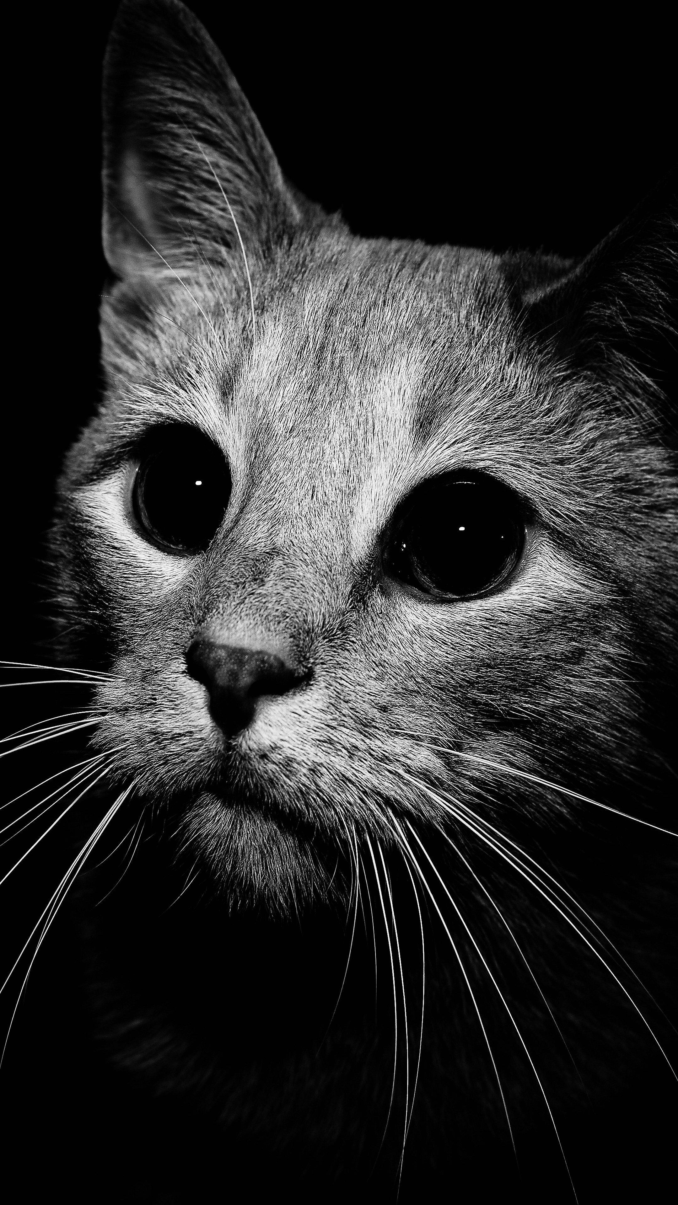 imagens Para Celular gatinho