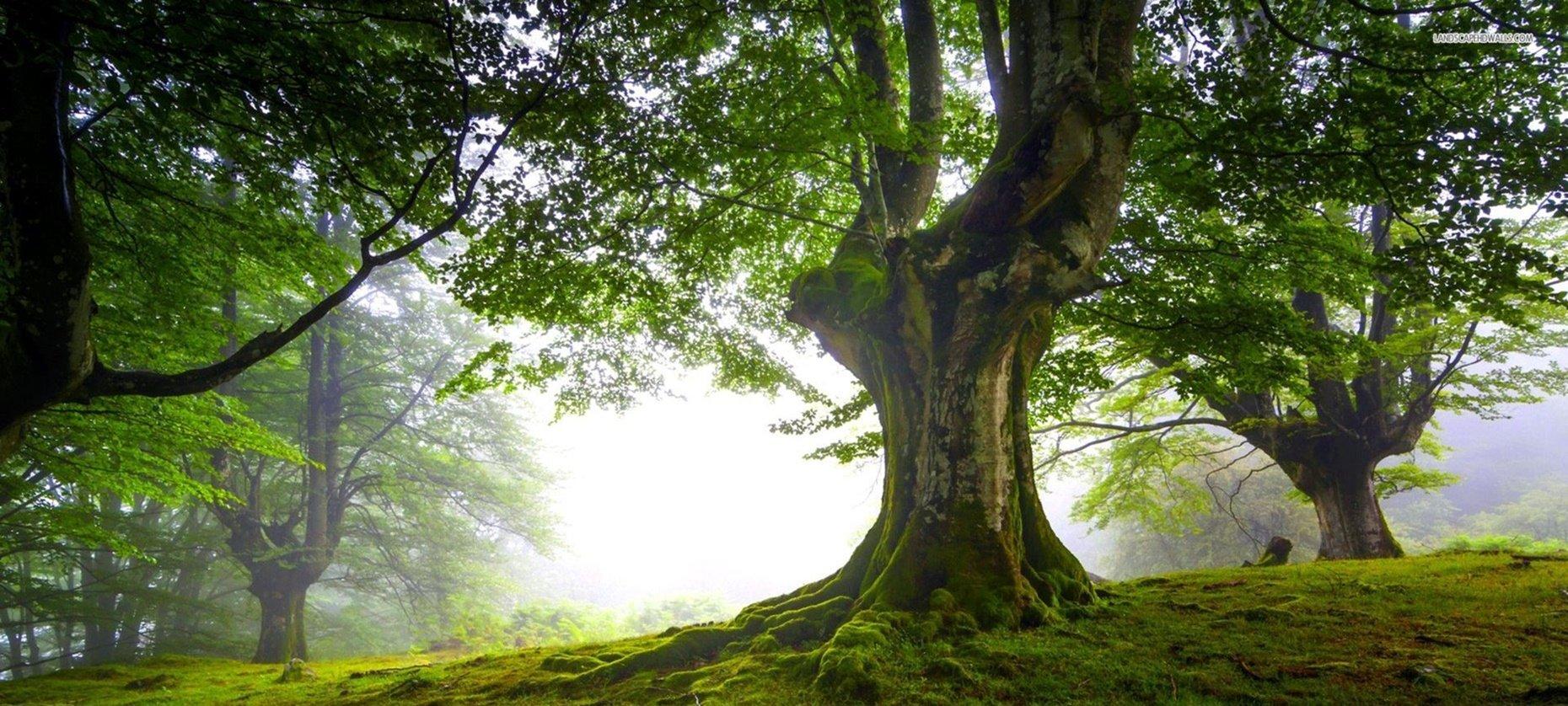 30 Frases Sobre O Dia Da árvore Para Postar Nas Redes Sociais
