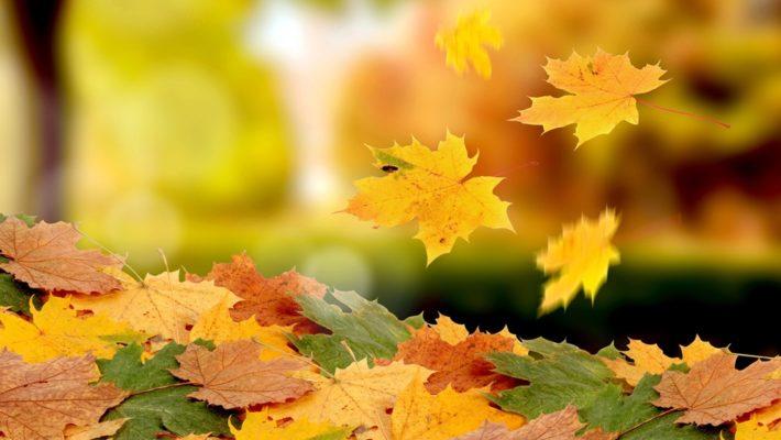 porque as folhas caem no outono